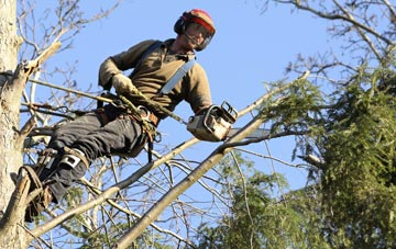 hiring experienced Ruislip Manor tree surgeons