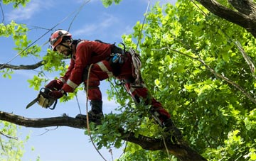 find trusted rated Ruislip Manor tree surgeons in Hillingdon