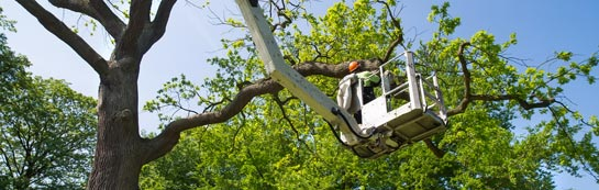 Ruislip Manor tree surgery services