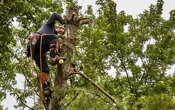 tree surgeon Ruislip Manor, Hillingdon