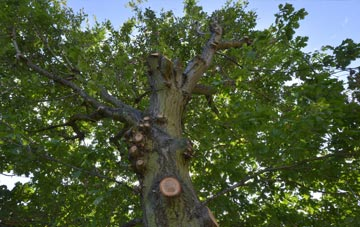 what is Ruislip Manor tree surgery?